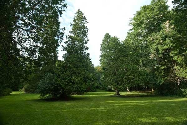 Small Meadow.jpg