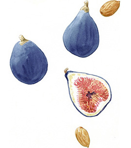figs_website.jpg