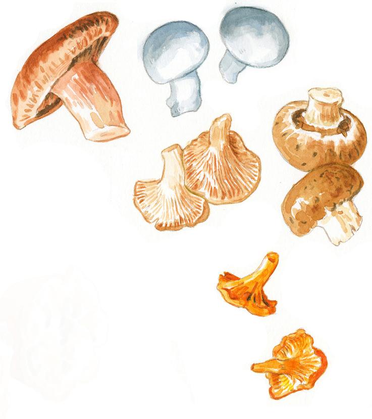 mushrooms_website.jpg