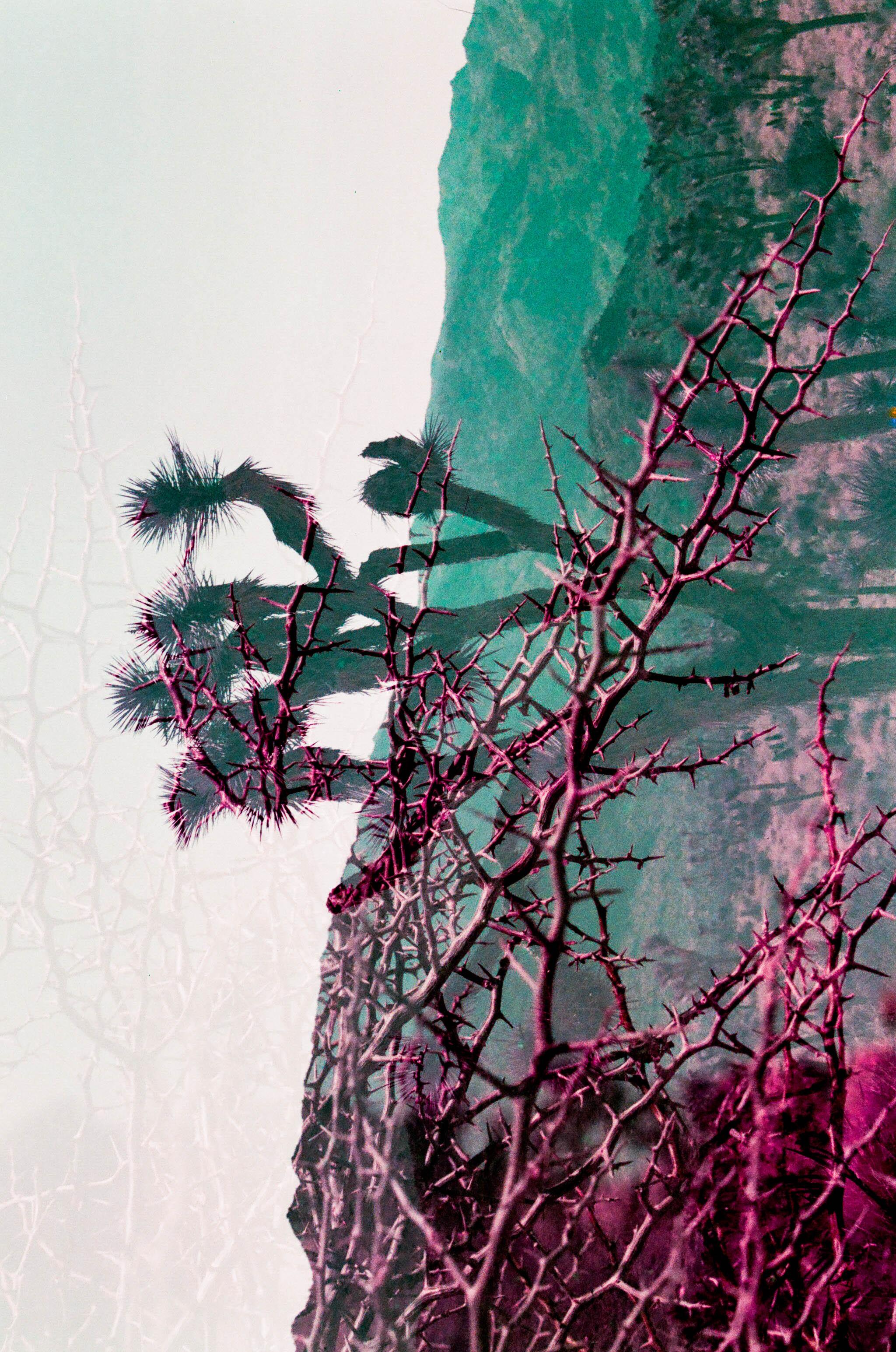 Joshua Tree - Mac's Birthday 11.11.18 35mm-63.jpg
