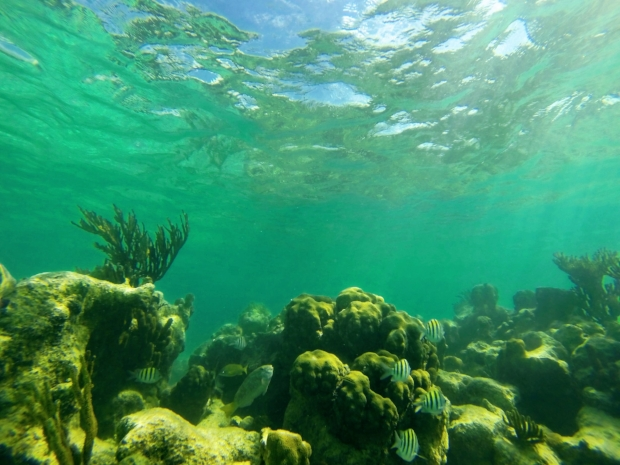 Wow! Snorkeling at Akumal Beach