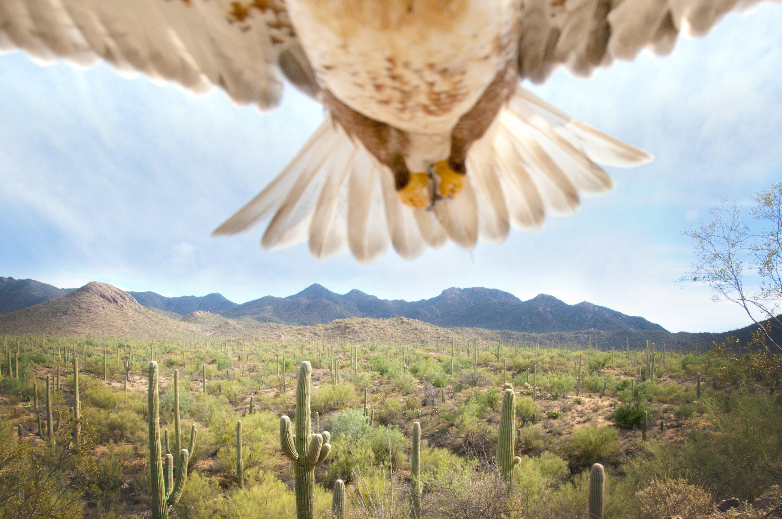 saguaro15.jpg