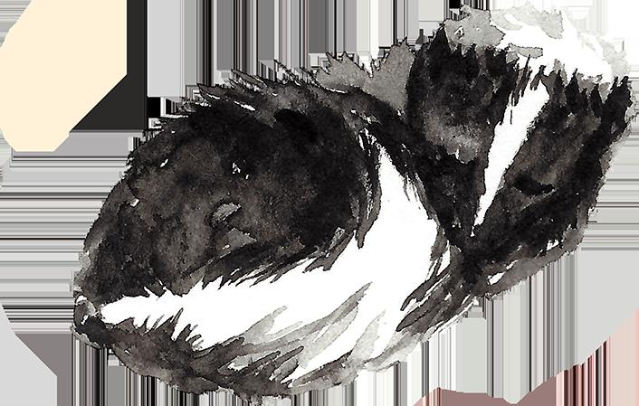 MB-Woodland-Skunk.PNG