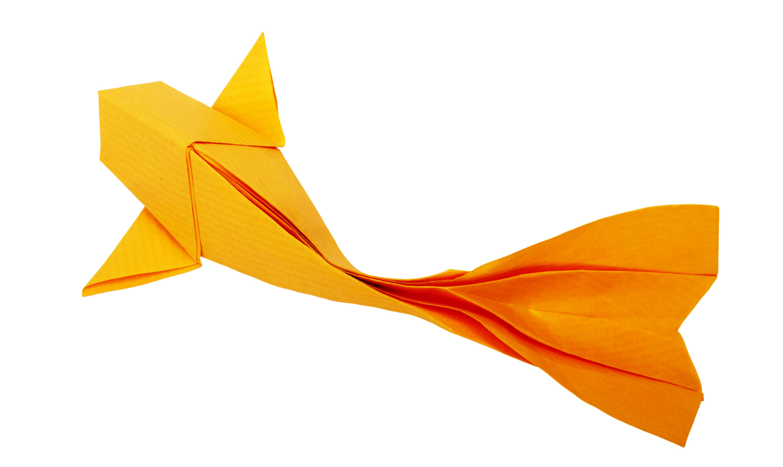 Origami fish immigrant report AS.jpeg