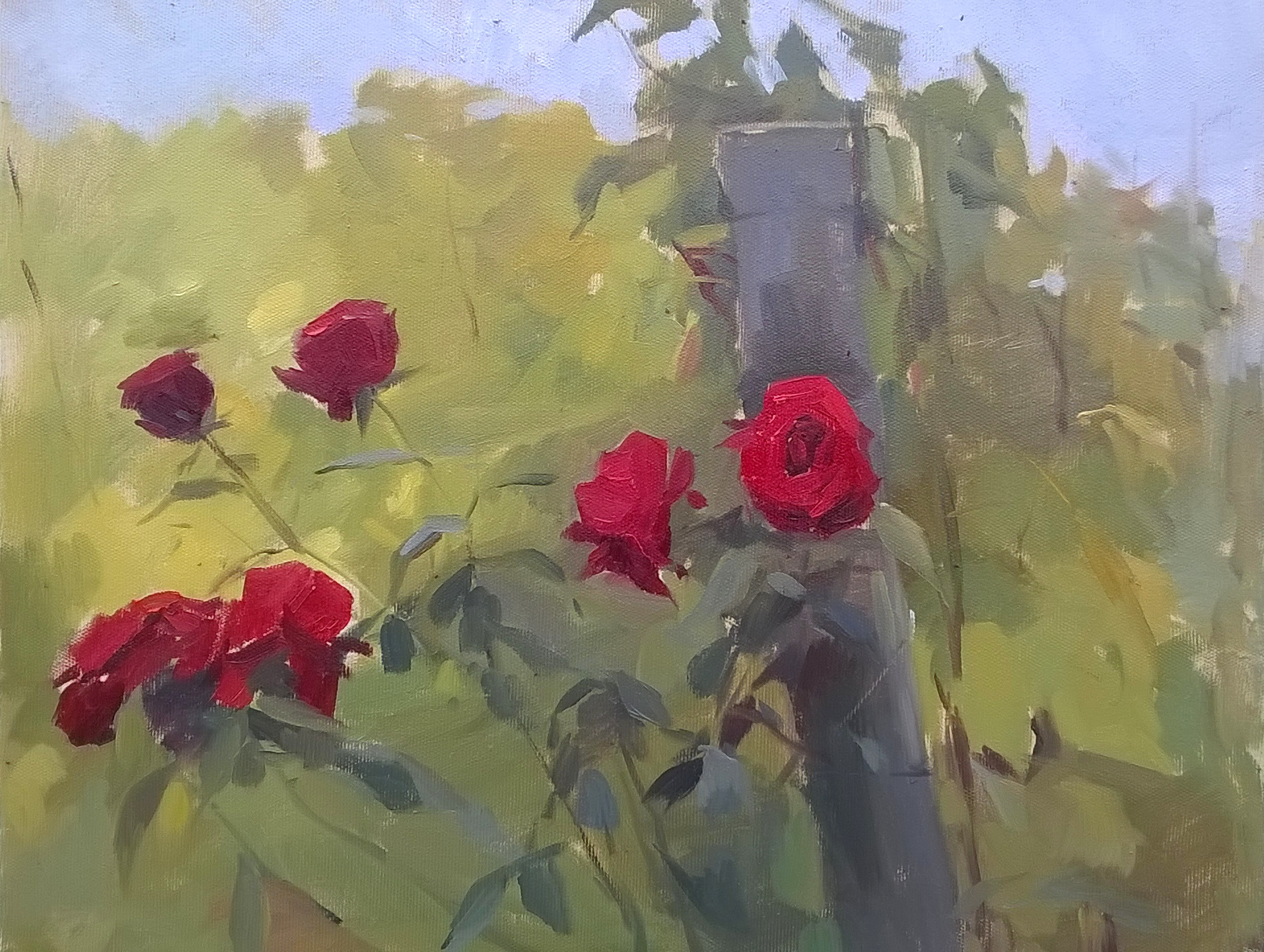 'Roses at Pontassieve' 40 cm x 50 cm Oil on linen