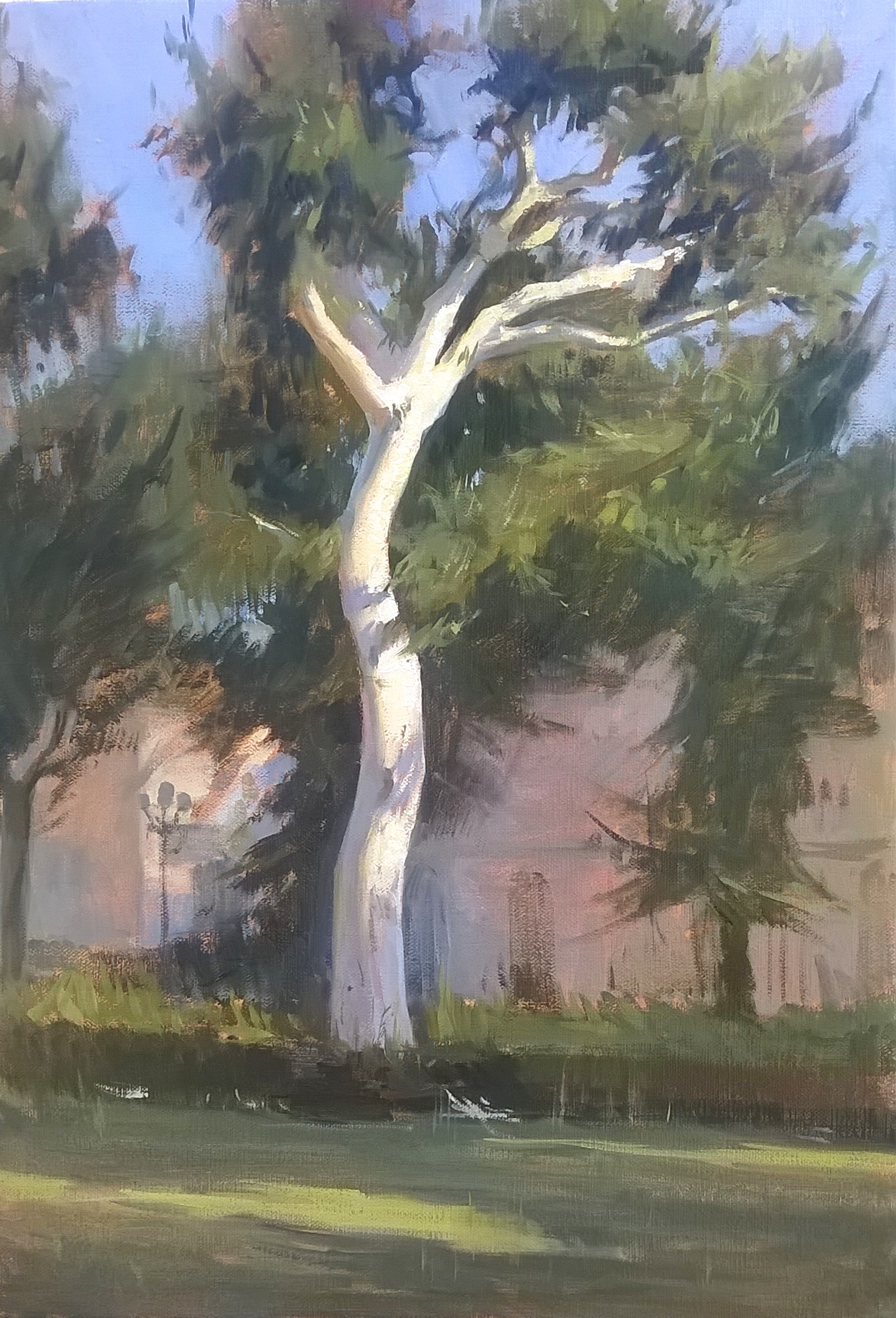 'Beach tree' 40 cm x 50 cm Oil on linen