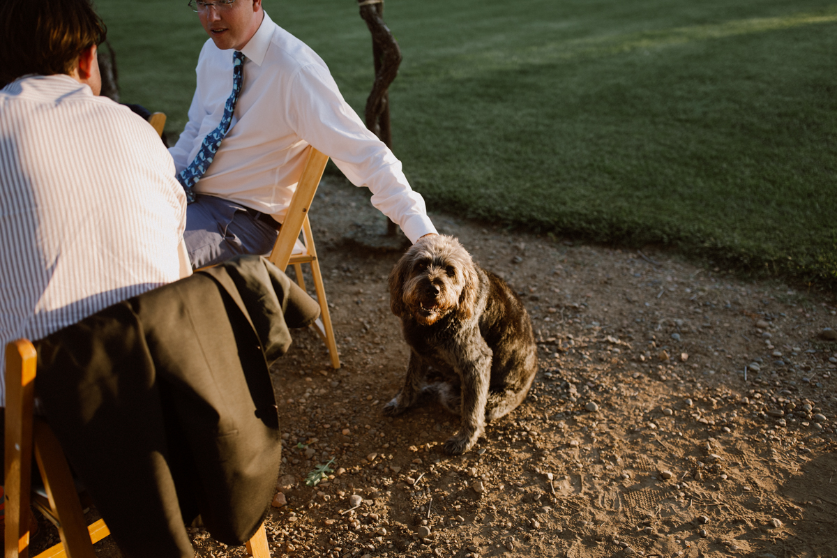 Family dog at the wedding.