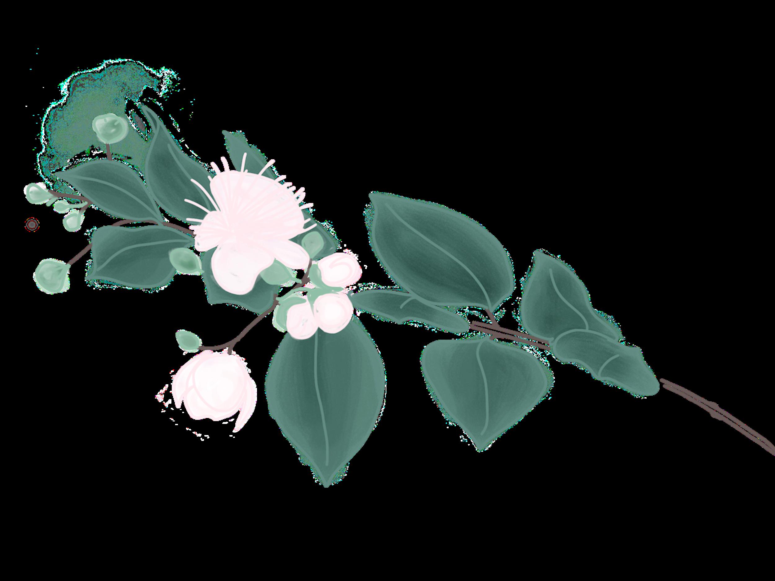 myrtle bough