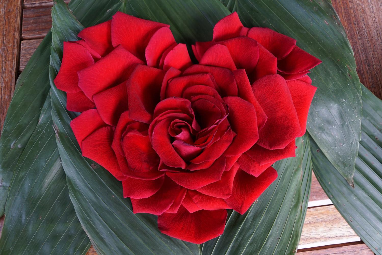 red-rose-heart.jpg