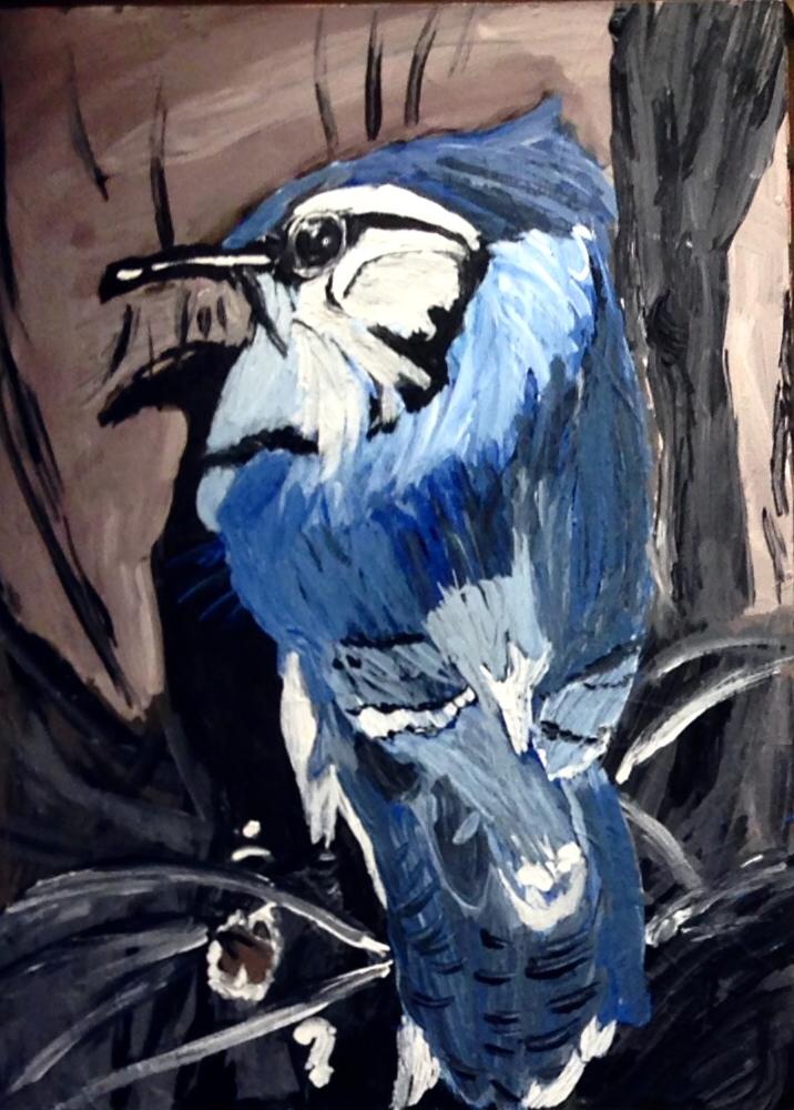 Blue Jay Karen C.jpg
