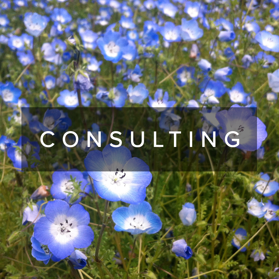 consulting.jpg