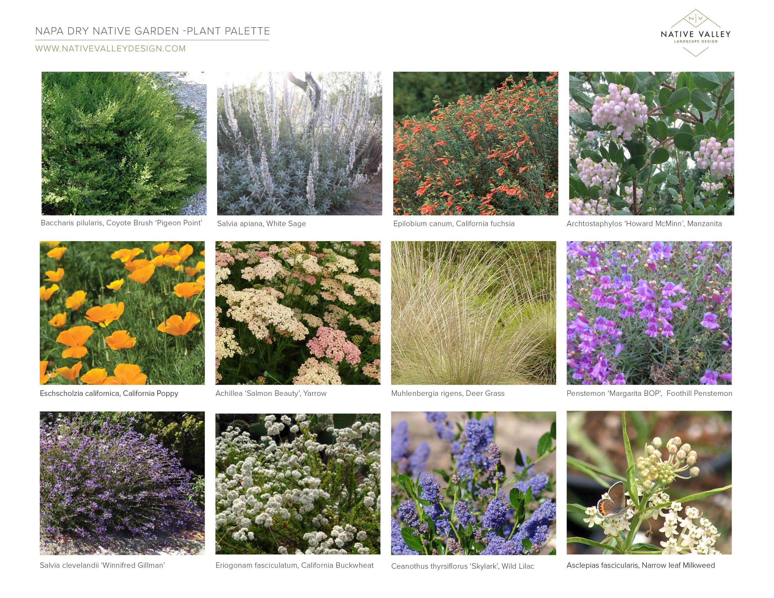 Napa_DryGarden_PlantPalette.png