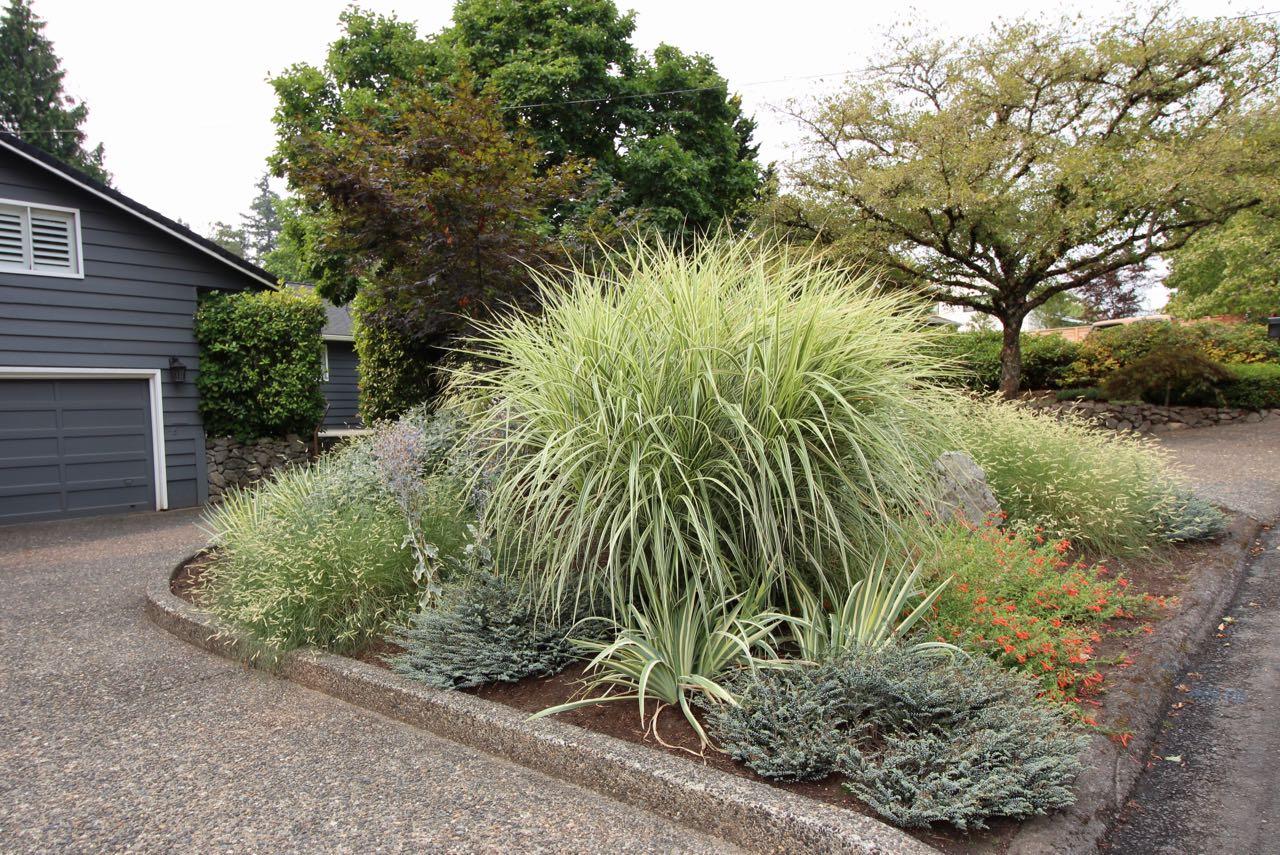 Plant detail front yard.jpg