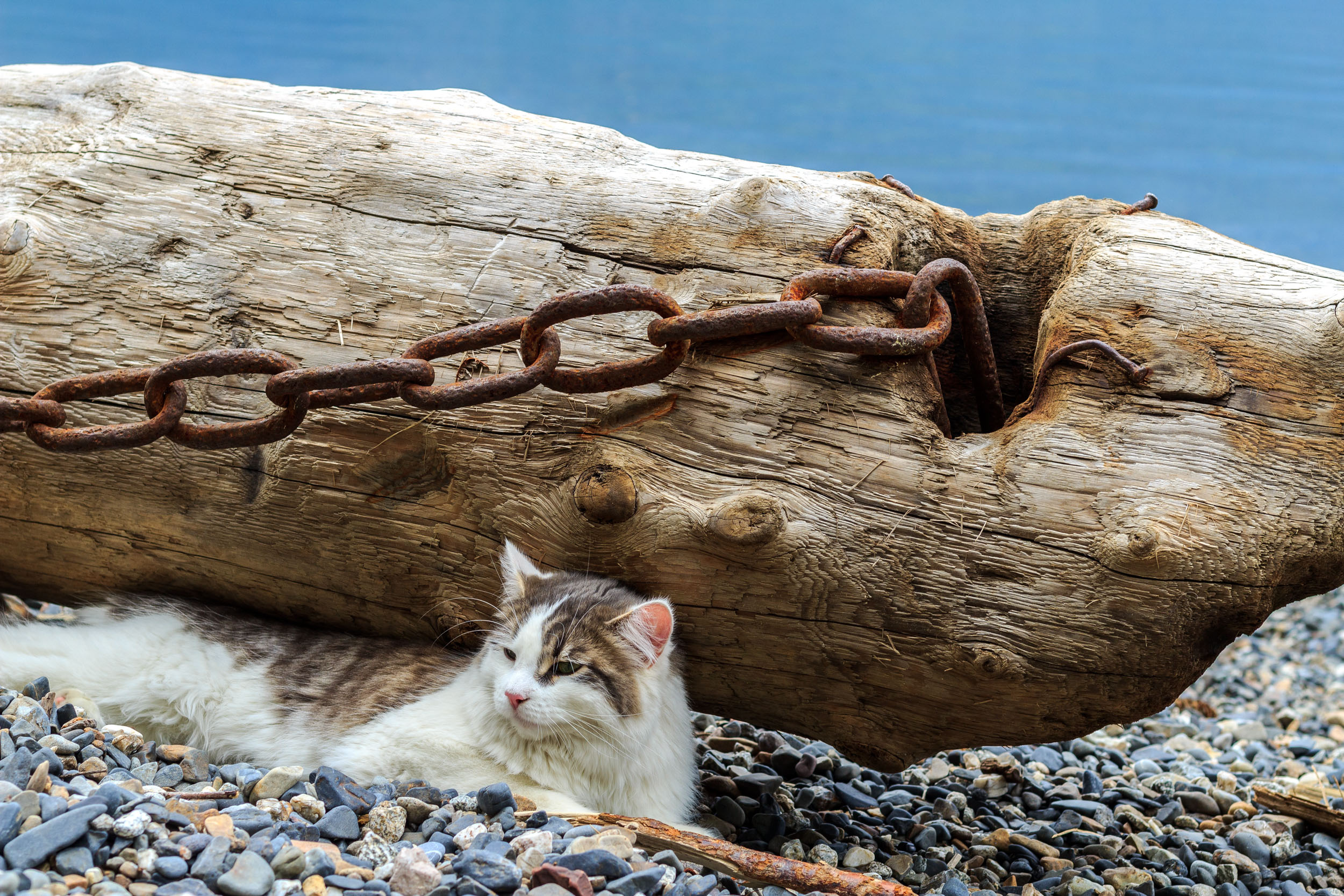 A Kootenay Kitty at Cooper's Beach - Silverton BC  Copyright © Afro Boy Productions. All rights reserved.