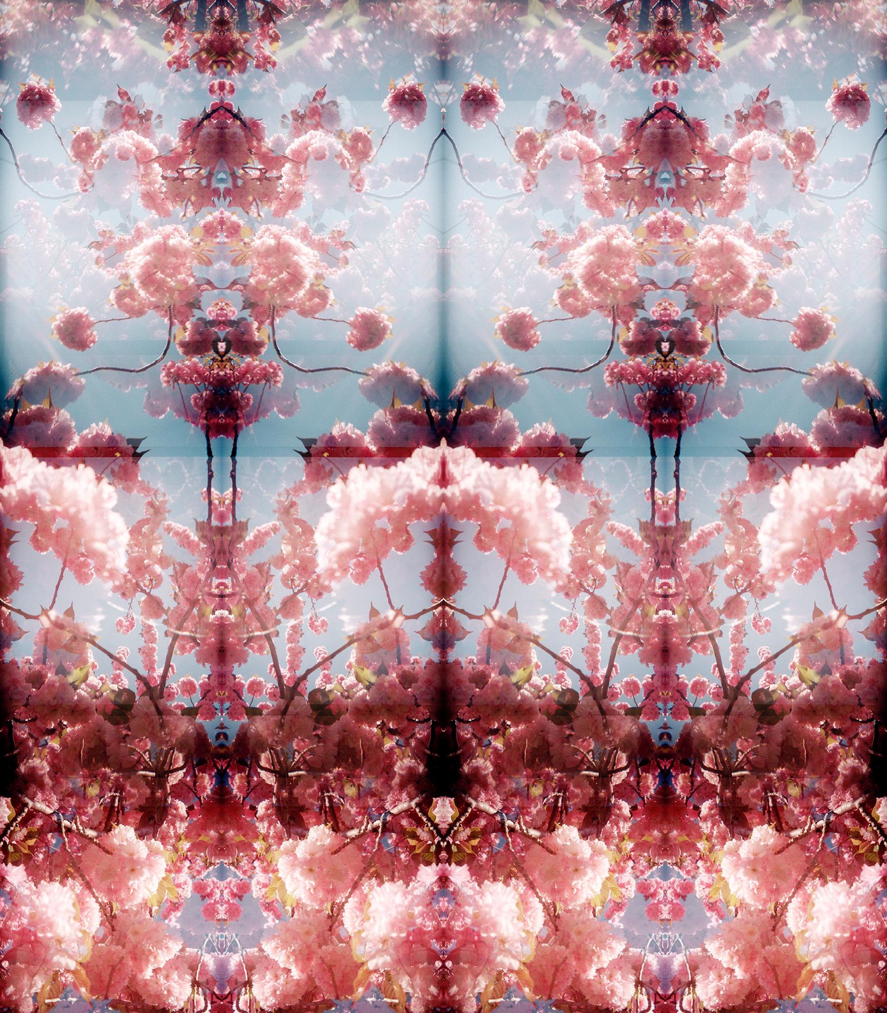 CherryBlossoms9.jpeg