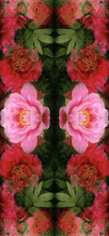 Peonies2 copy.jpg