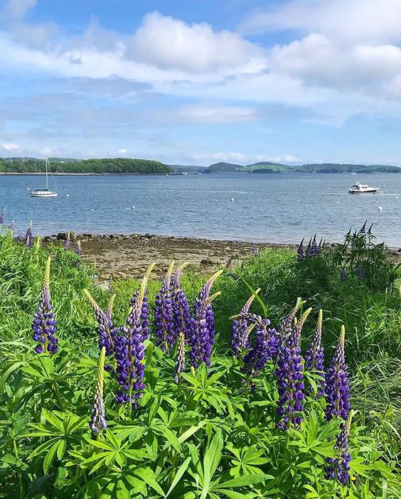 House Tour-A Labor of Love in Castine Maine 15.jpg