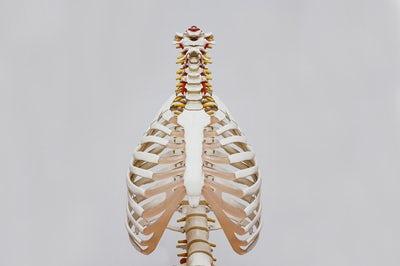 Intro to Anatomy for Yoga Teachers