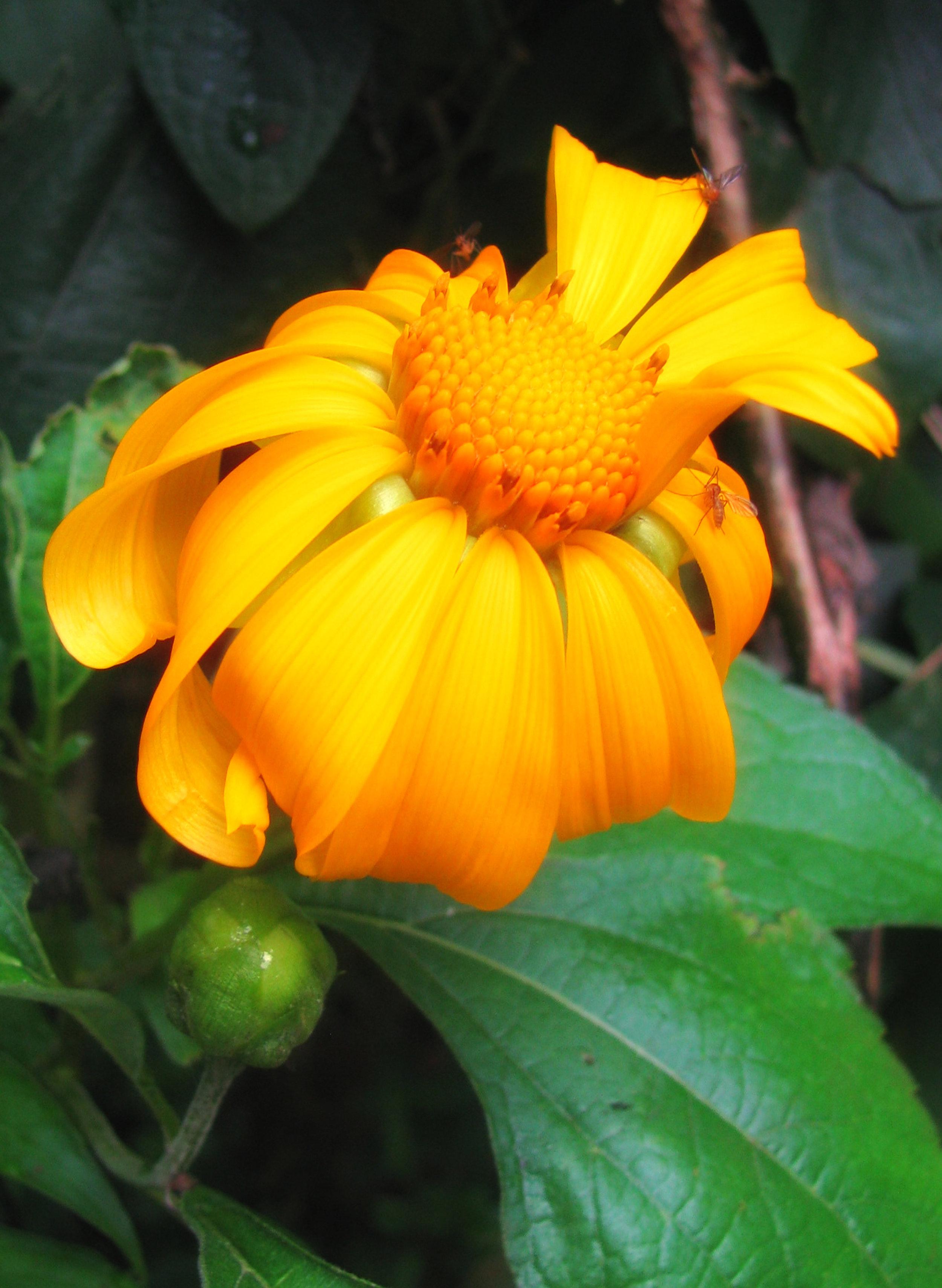 300 dpi golden flower.jpg