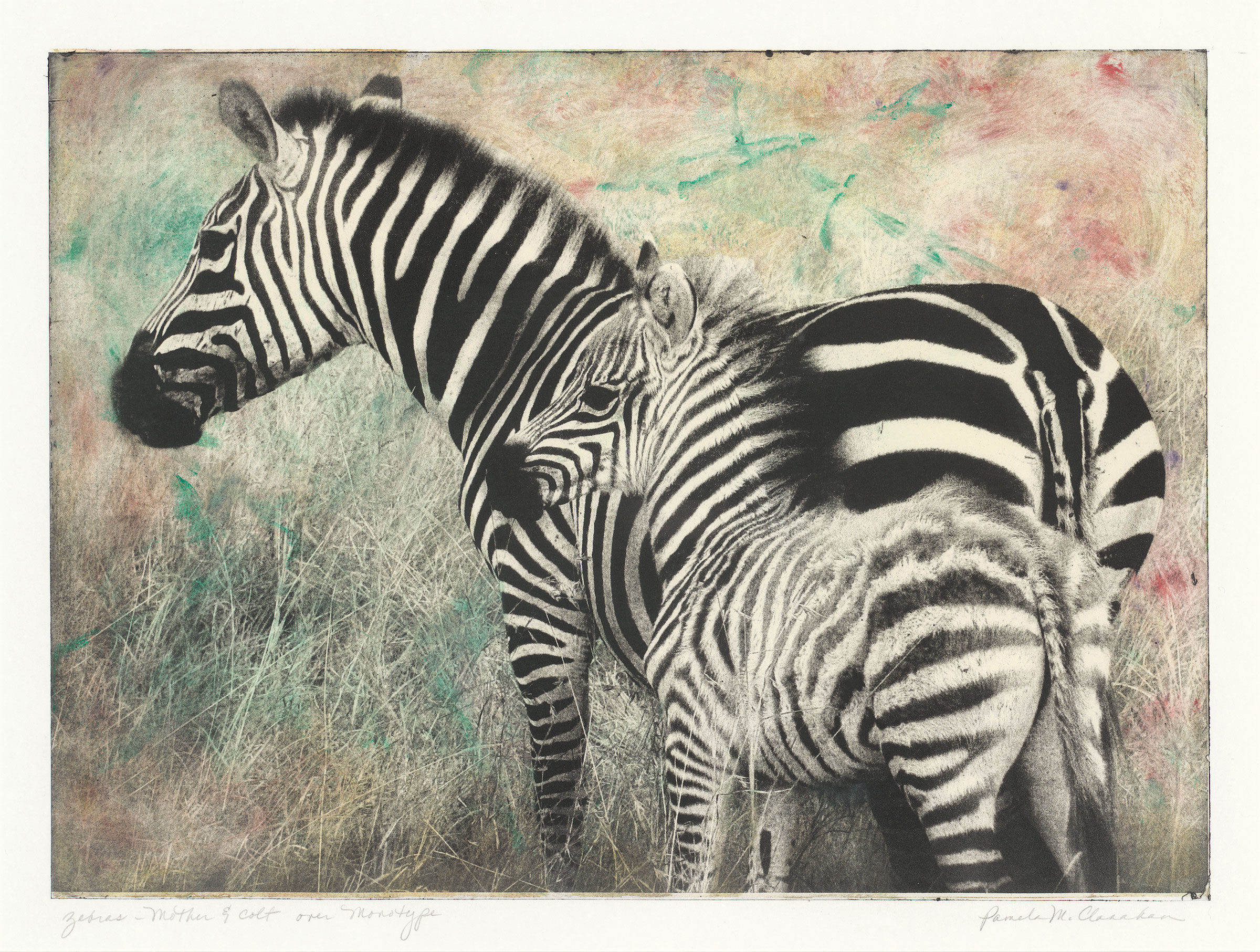 "This print was made while working with Ron Pokrasso in Santa Fe, New Mexico. I made this photograph while on safari in Kenya, then converted it to an ""ImagOn"" plate for Intaglio print-making. First I made a larger monotype plate with some varied color and marks, then wiped away the color where the zebras would print. I love the result. The original hangs in my breakfast nook; Archival Giclee prints are available in various sizes. Please contact me for more information."