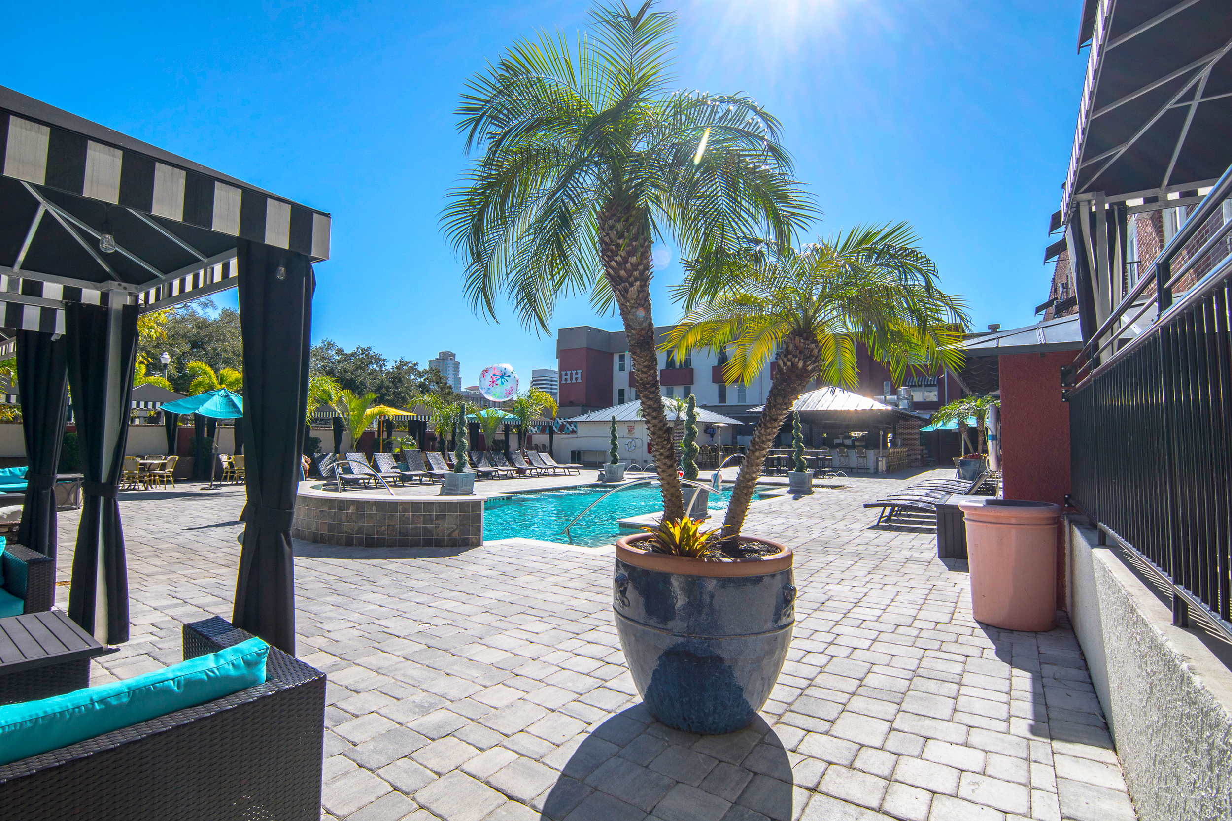 Potted palm tree in pool area