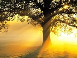 sunny tree.jpeg