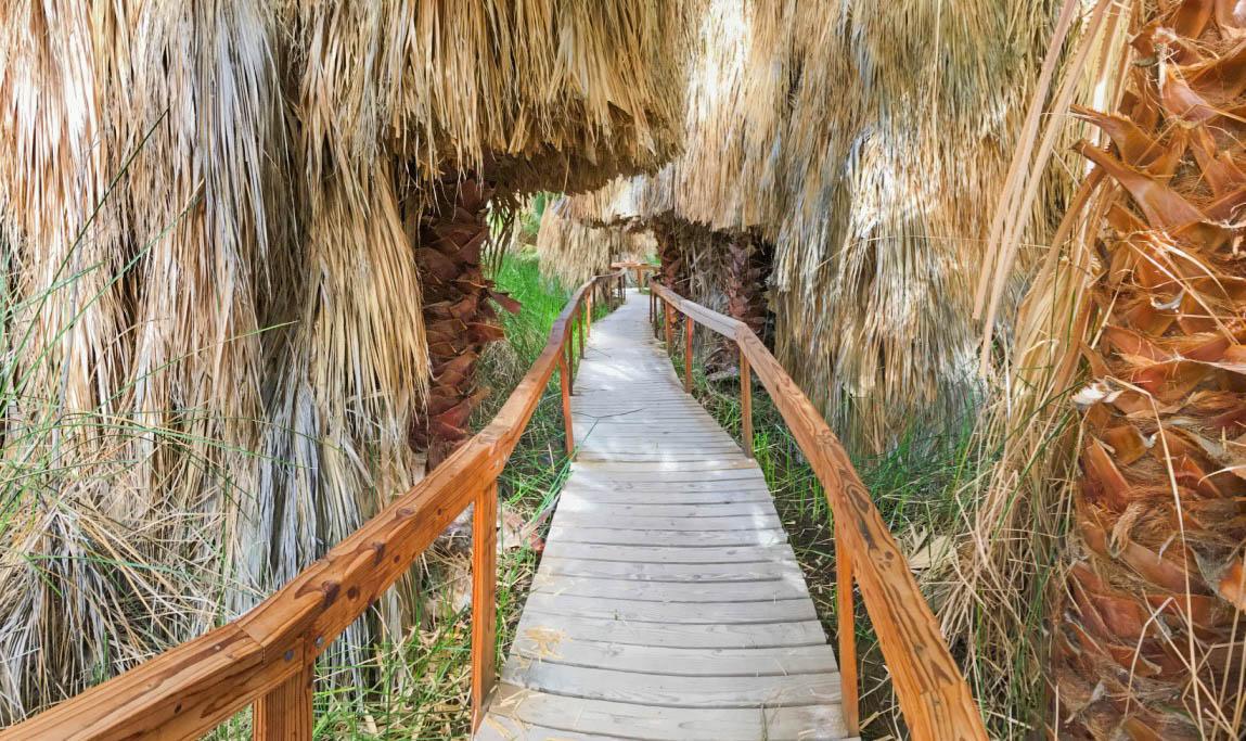 Coachella Valley Preserve–Thousand Palms Oasis Preserve