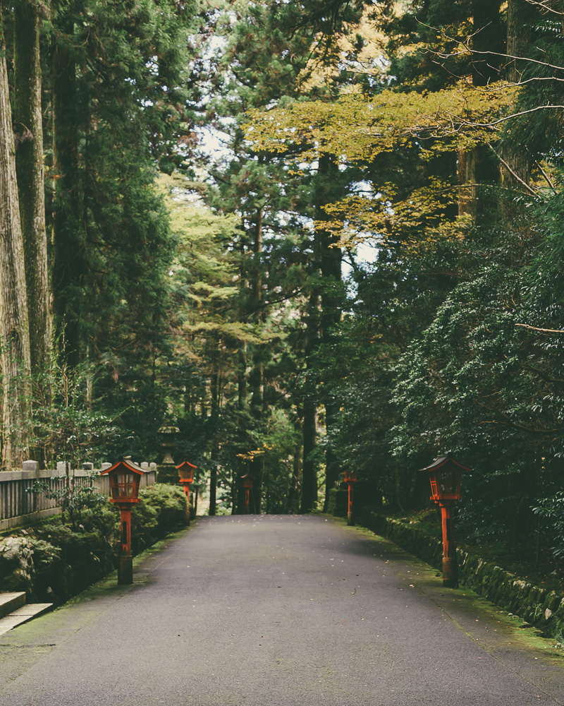 Hakone Shrine Forest Walk