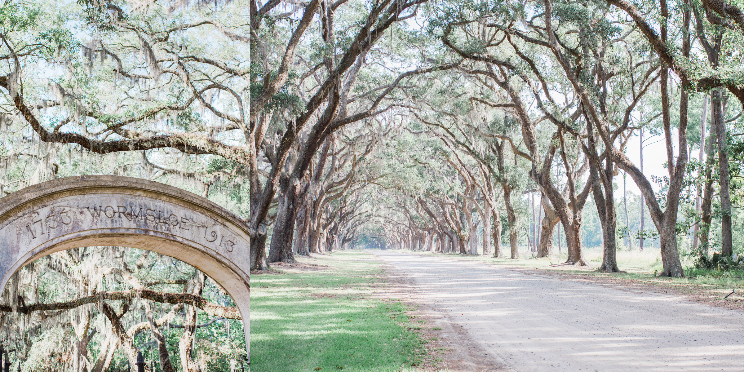 Wormsloe Historical Site Surprise Proposal, Engagement