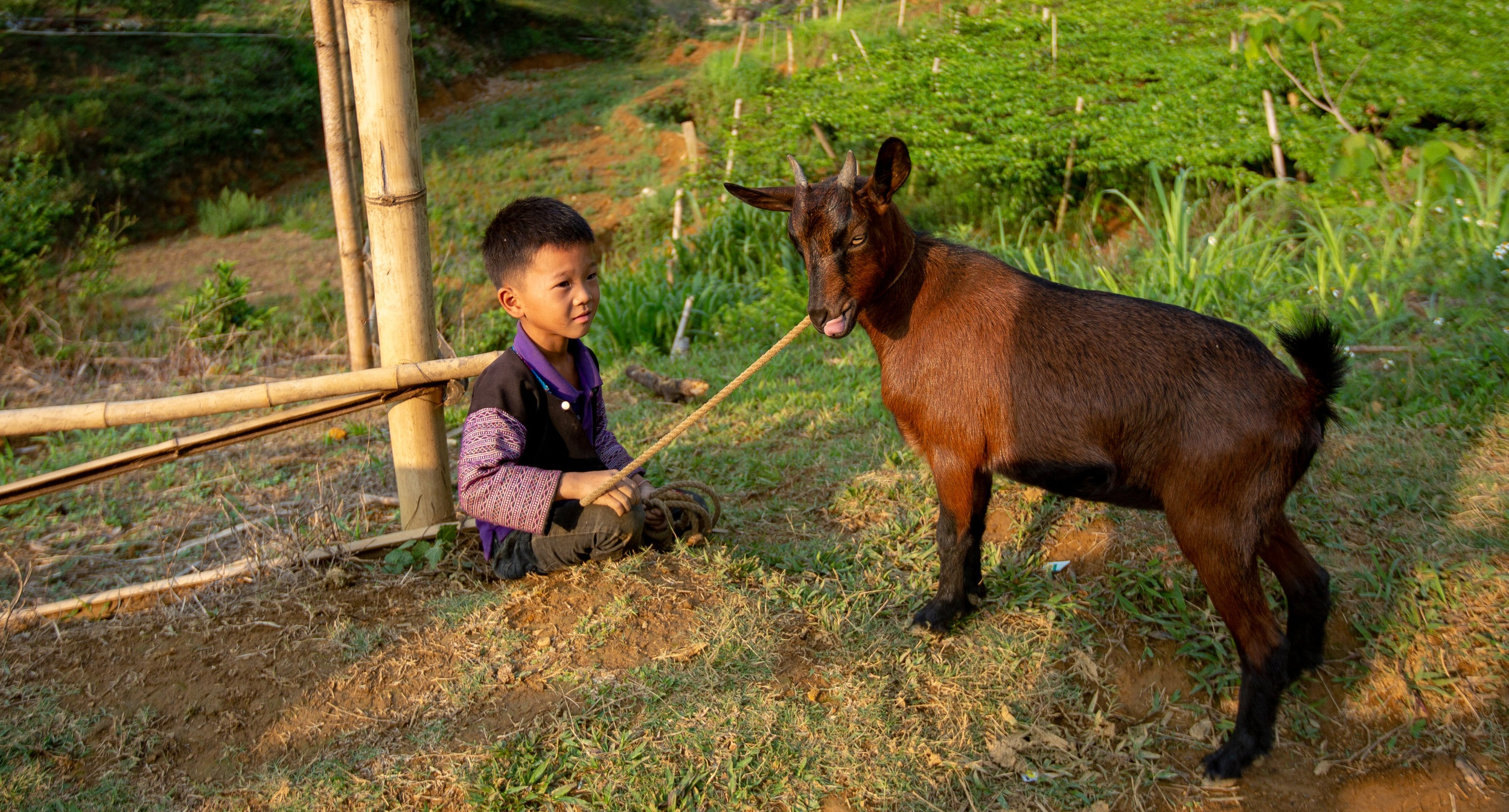 Kid with goat