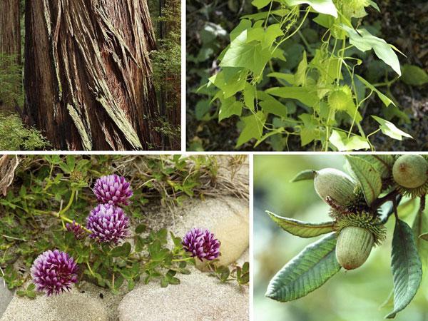 plants_web_half.jpg