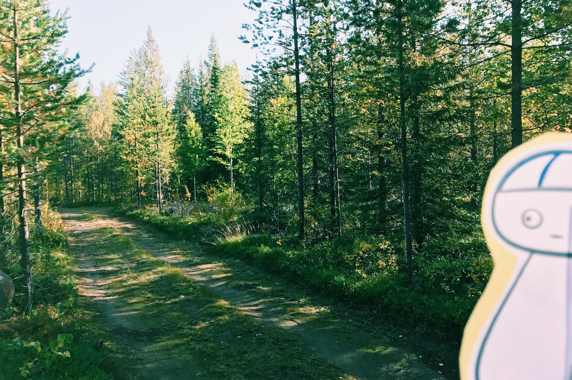 ピントが森のほうにあってしまってゴメンマッティ・・・ in Finland