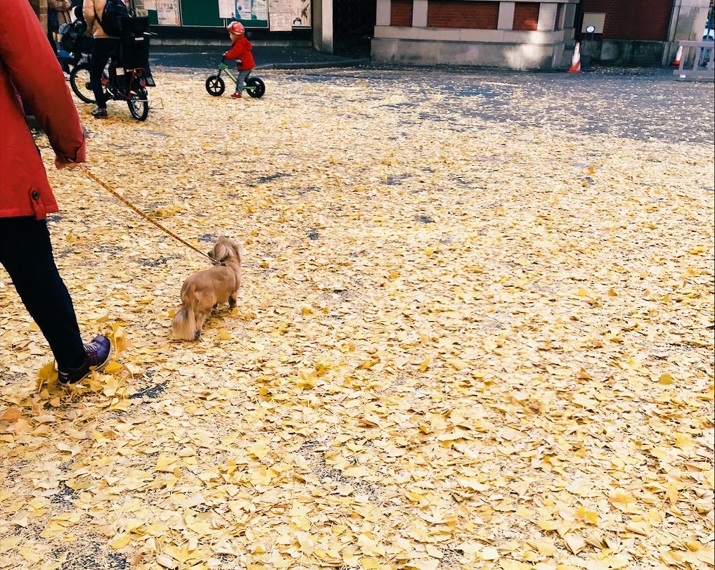 銀杏が好き!!秋が好き!
