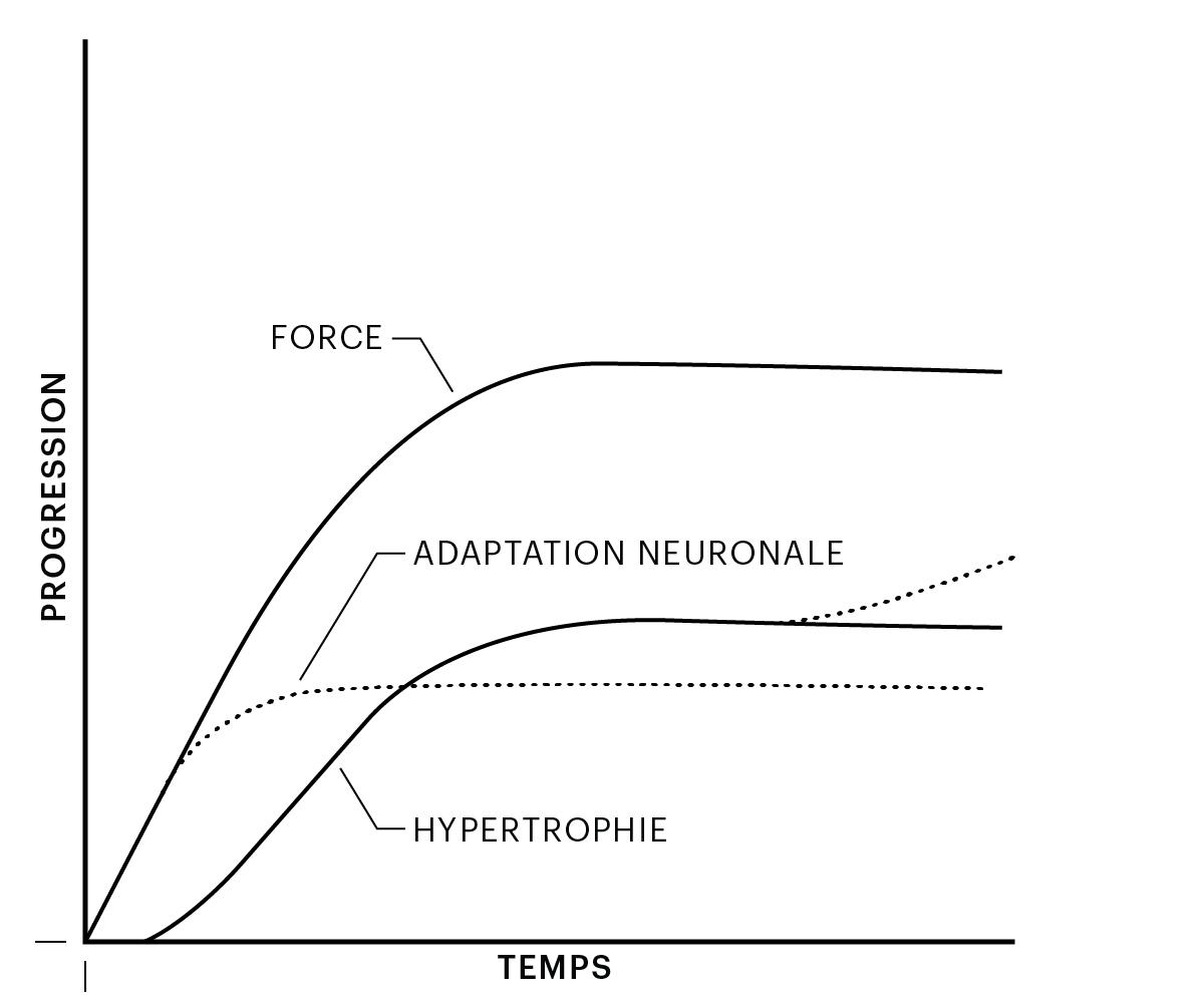 Figure 1: Progression dans le temps et adaptations