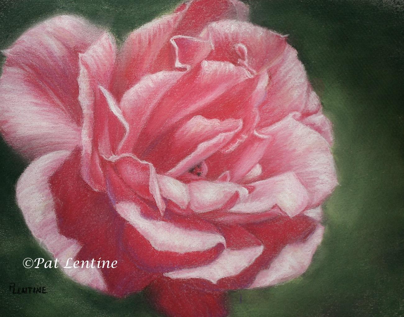 pink-rose-2.jpg