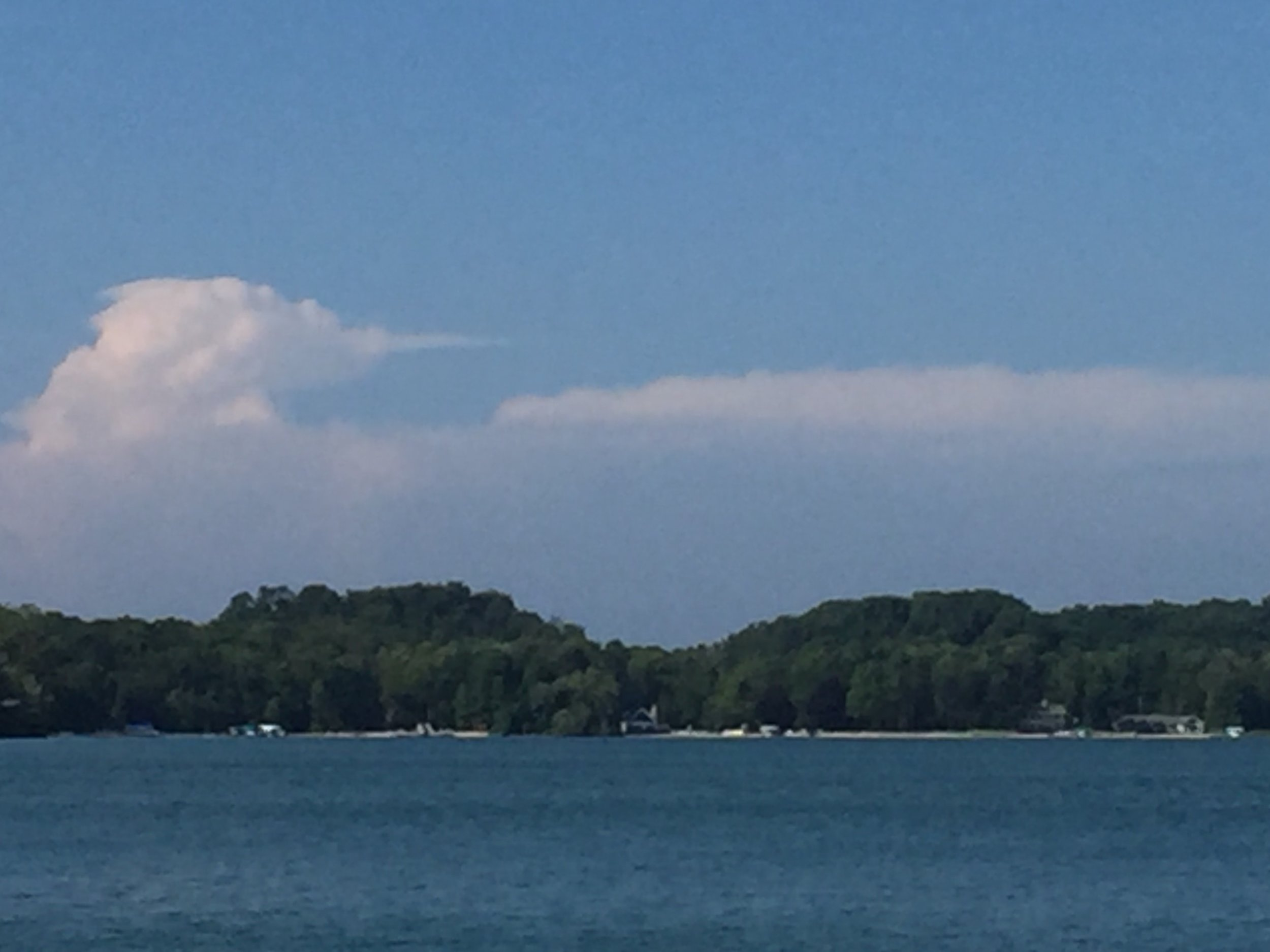 even the clouds look like mergansers!