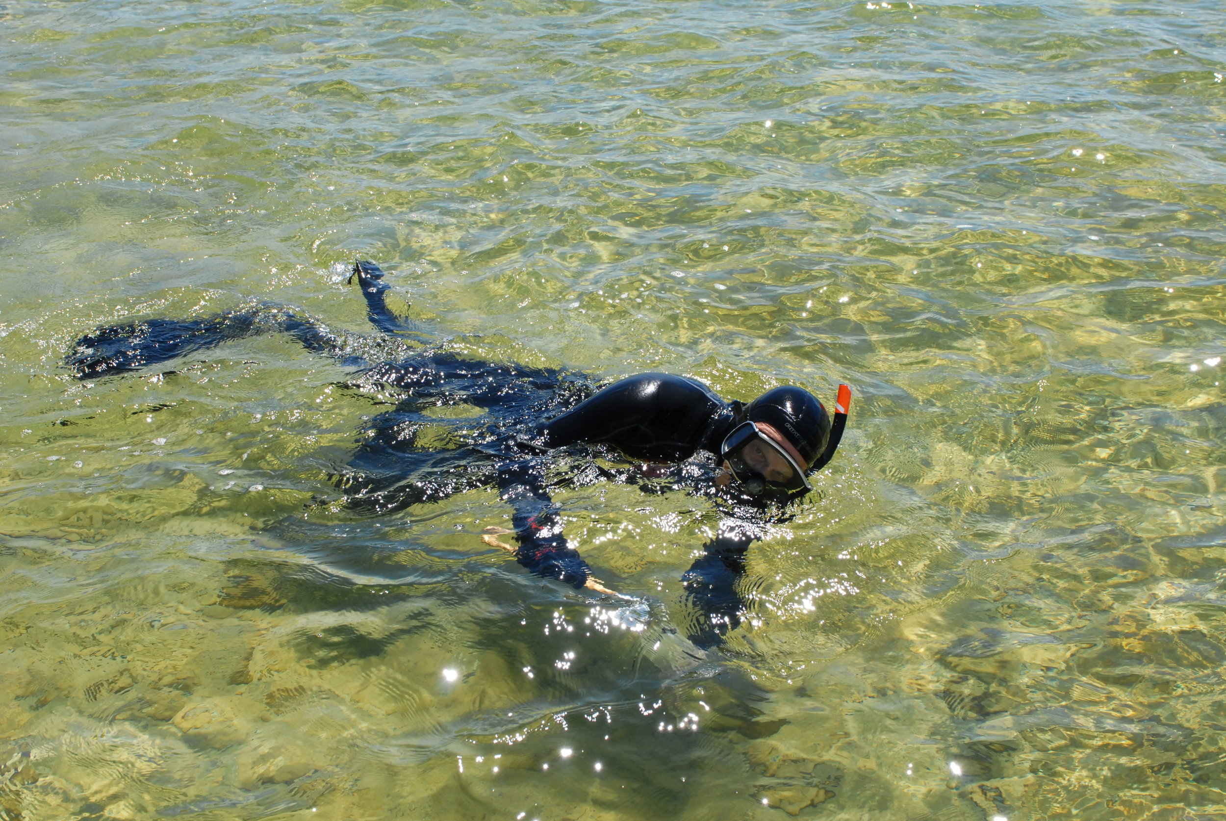 Snorkeling for snails to check for parasites