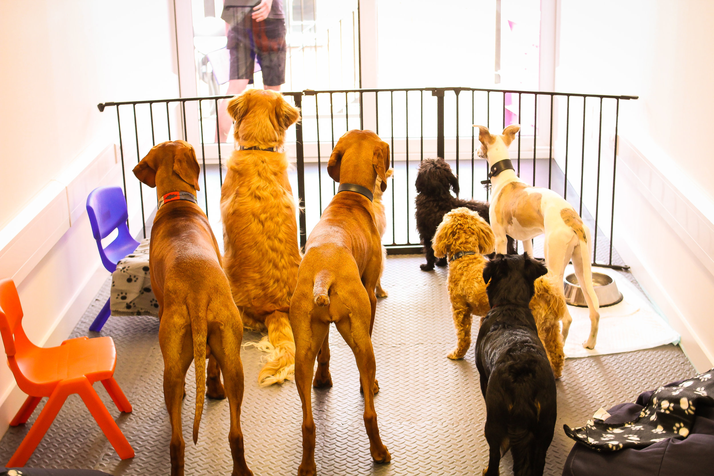 We bring a group of beautiful, affectionate dogs to your workplace. -
