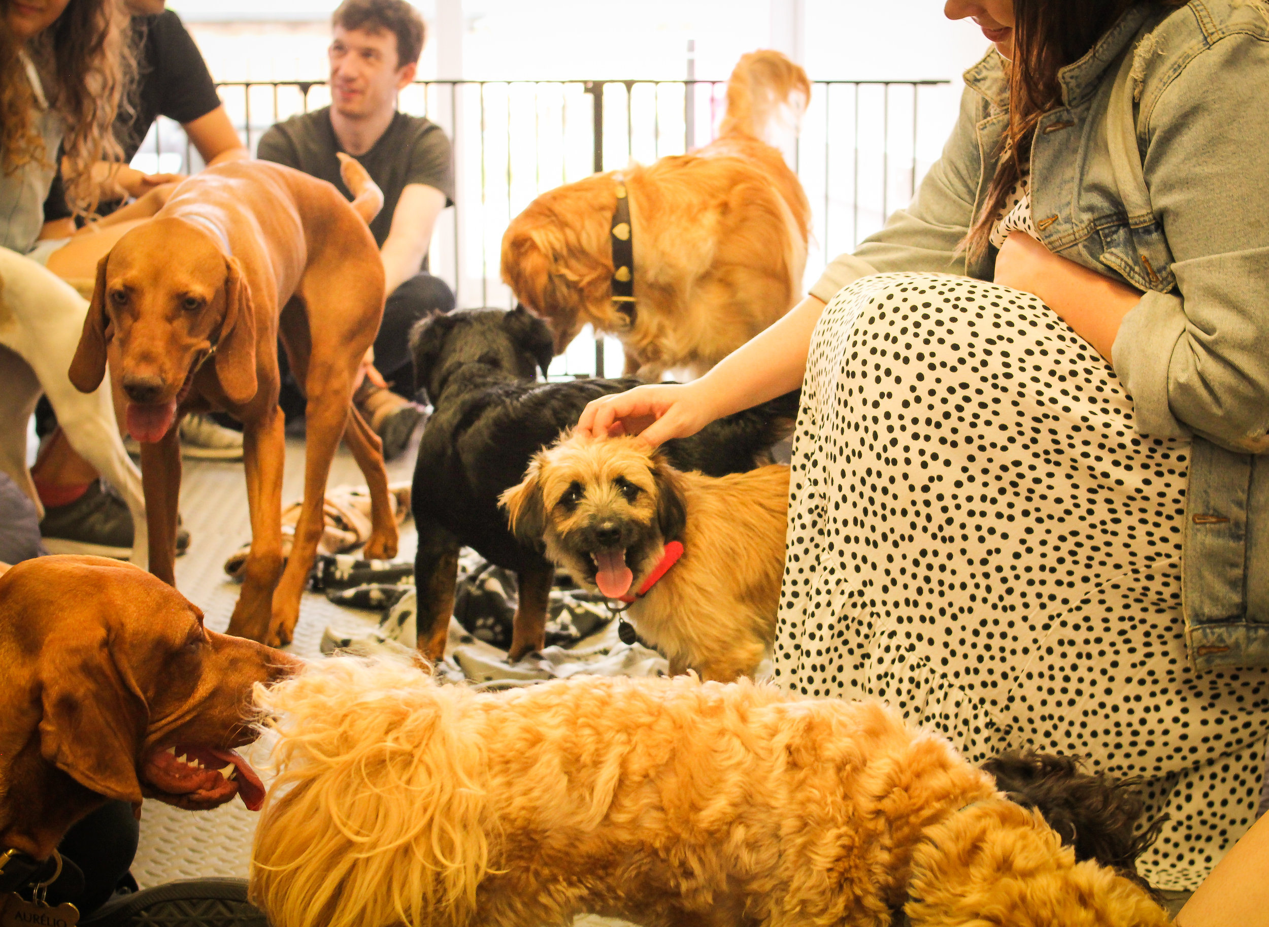 """""""I found the dog therapy very uplifting and soothing after a tough week. All the dogs were very friendly and energetic"""" - Helen, Boomf"""