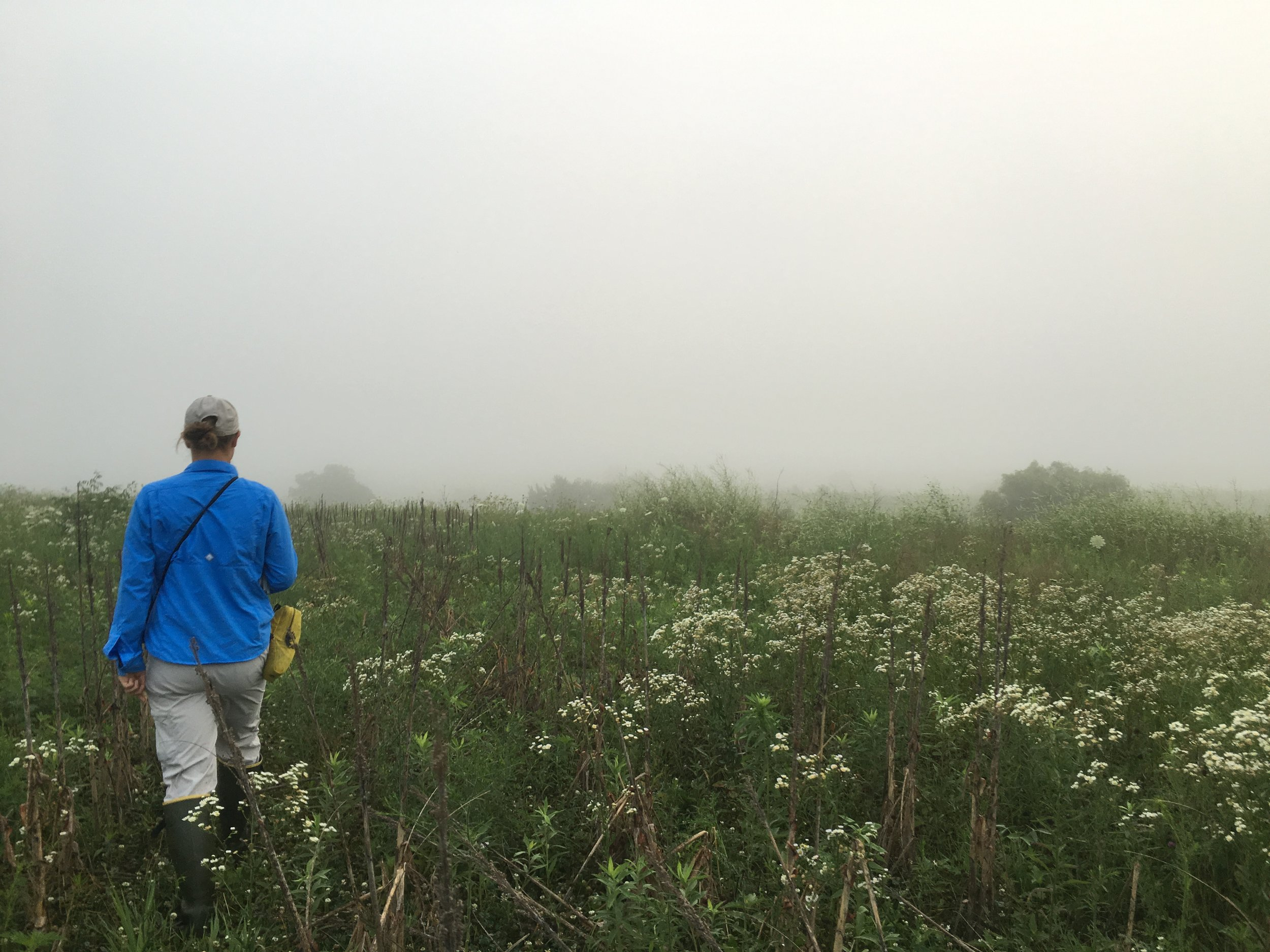 JJC_Iris in fog_RIE_2016.JPG