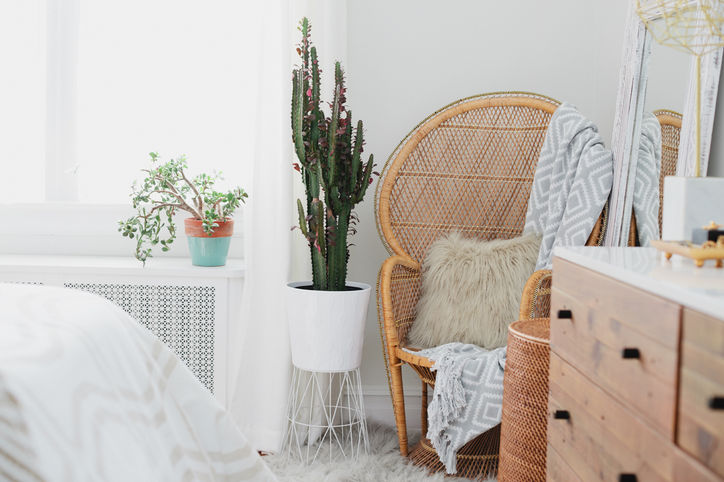 brooklyn-blonde-home-corner-cactus-w724 (1).jpg