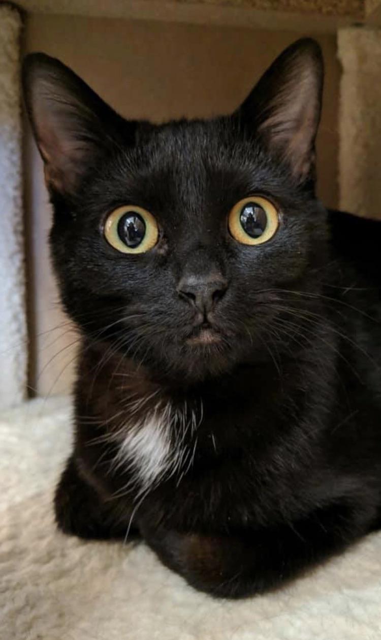 #242 Meow Meow