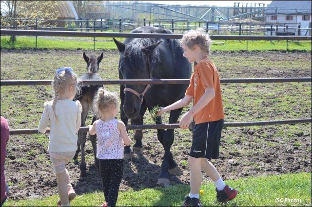 Tara Hills Stud Farm - Mother's Day Open House