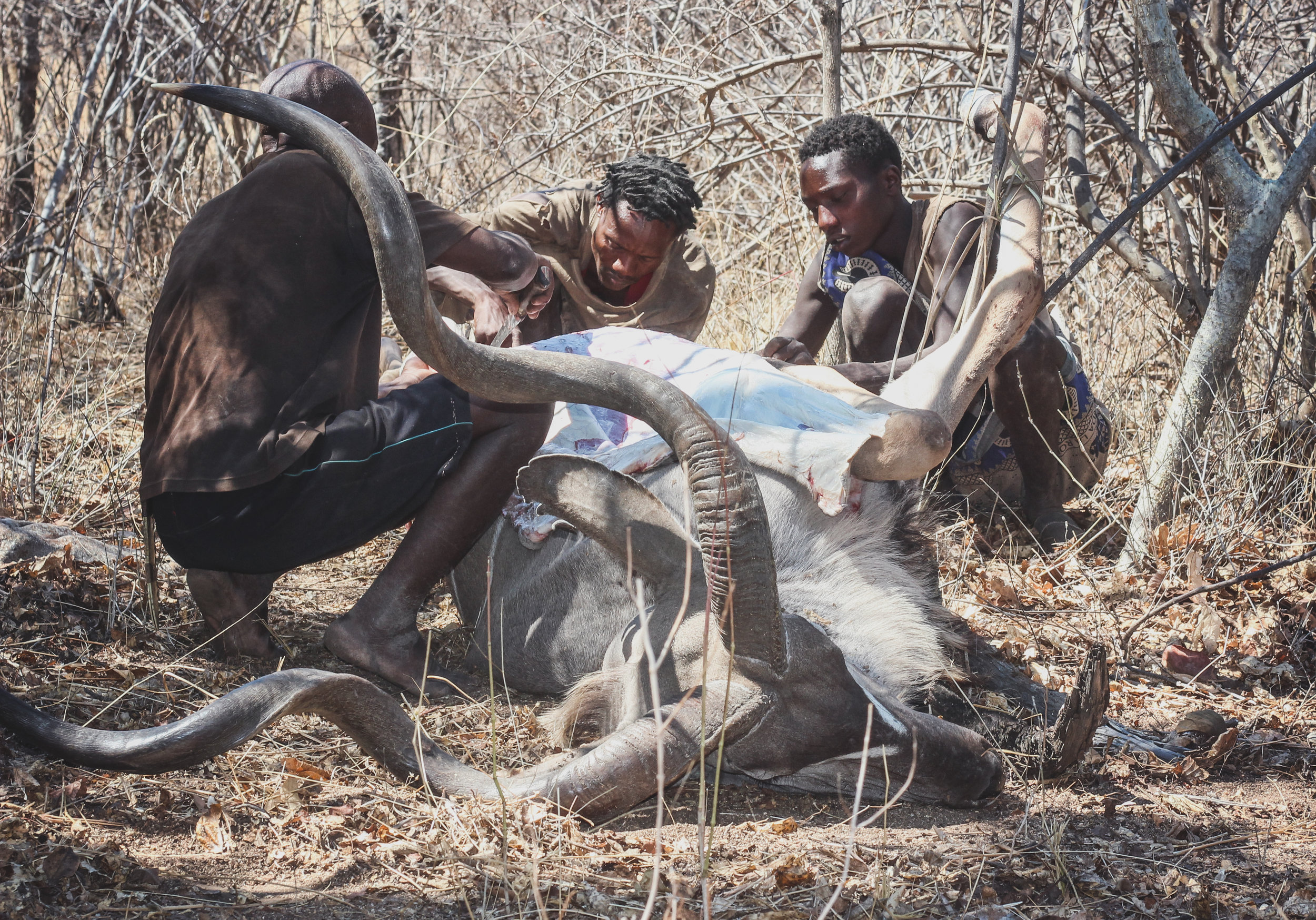 Hadza Tribe - Human Food Project - A Team Foudnation