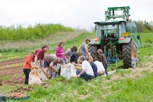 Beacon Farms - A Team Foundation