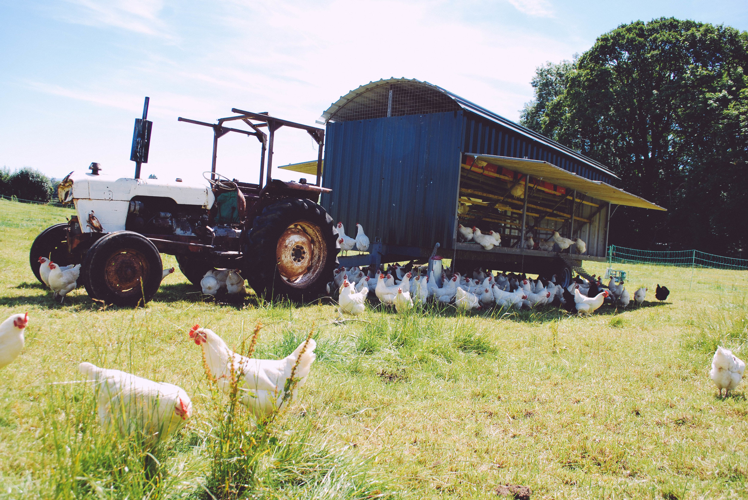 read More on the food, farming and countryside commission -