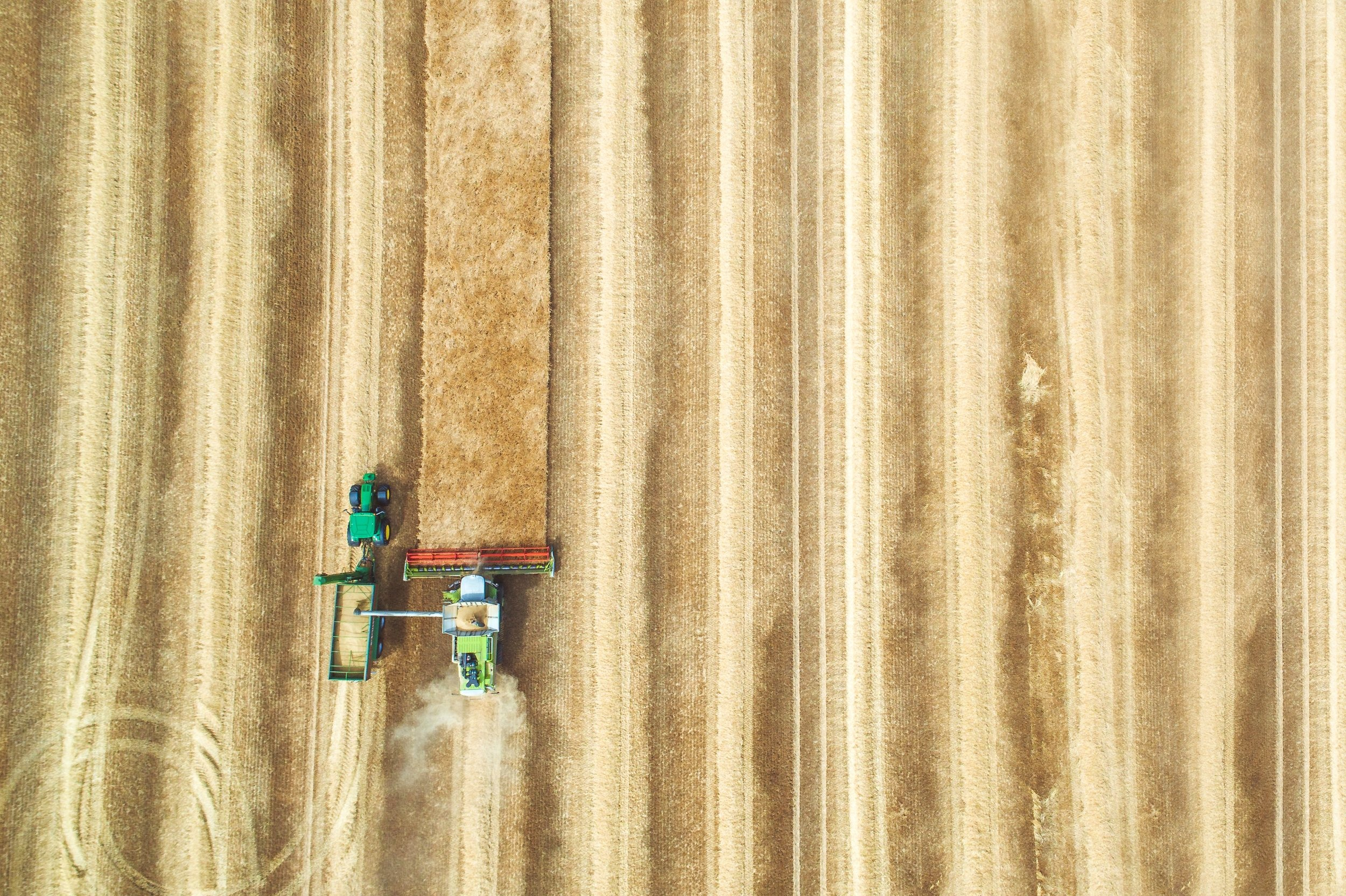 A bird's eye view of the neo-liberal monoculture that prioritises the maximisation of yield.