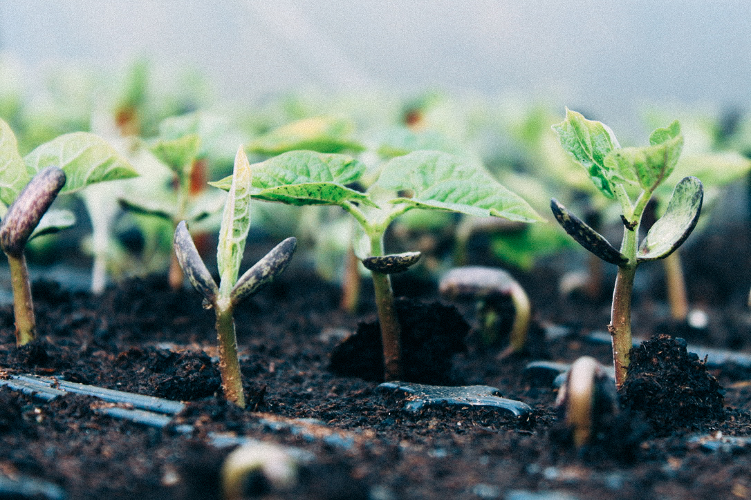 Raising Seedlings