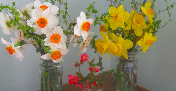 daffodils-featured.jpg