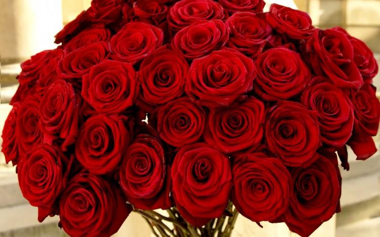 roses2-e1390540175513.jpg